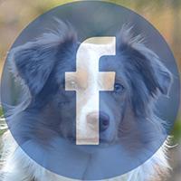 facebookseija